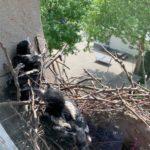 03.06.2020 | ...wir sind richtig groß geworden! Wie sieht es denn draußen vor dem Nest aus?