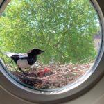 27.05.20 | Die Vogelmutter versorgt ihre Kinder.